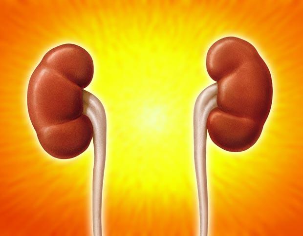 Procedures - Kidney